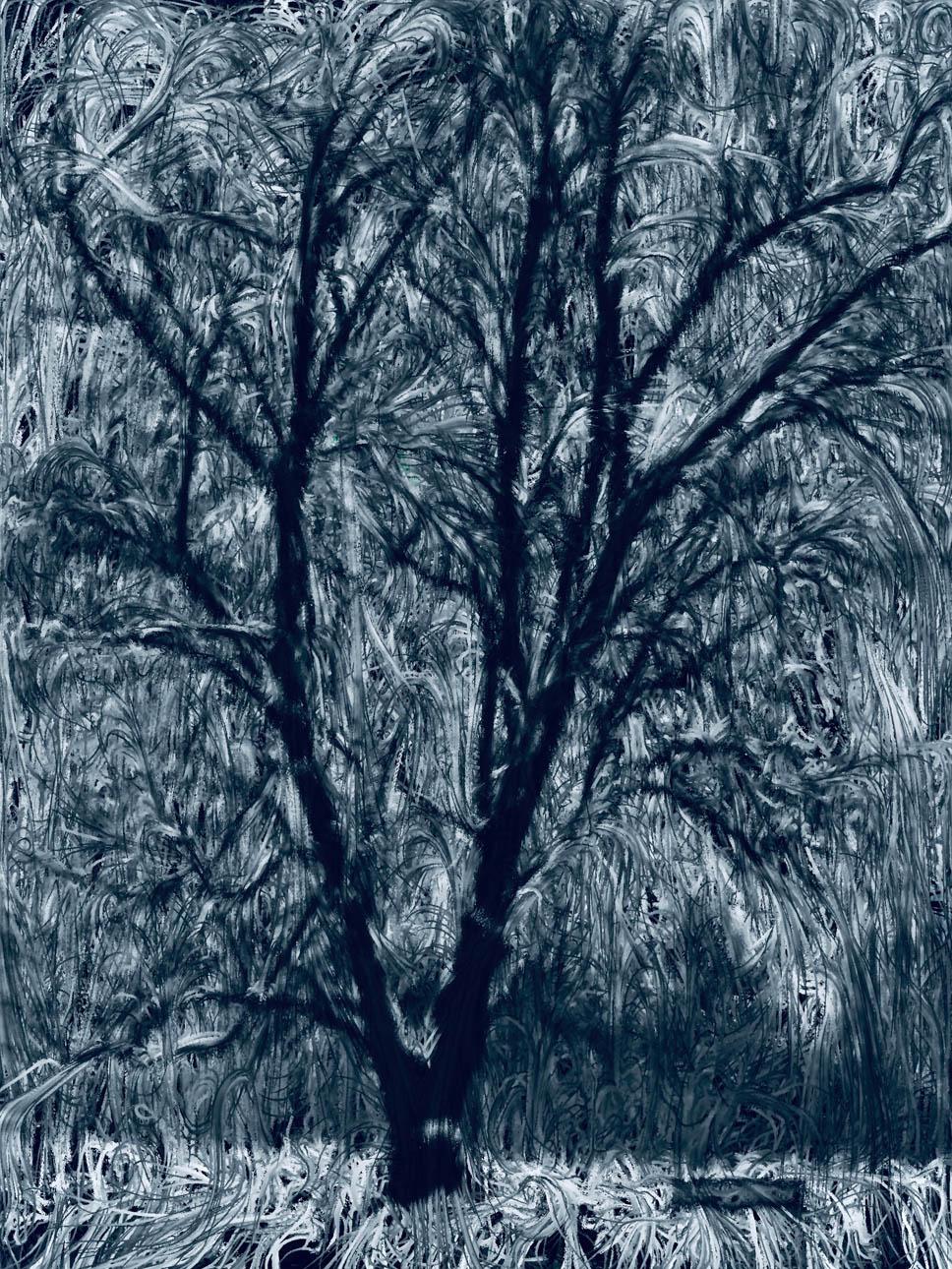 Tree of Twisted Air - Brian VanKorn