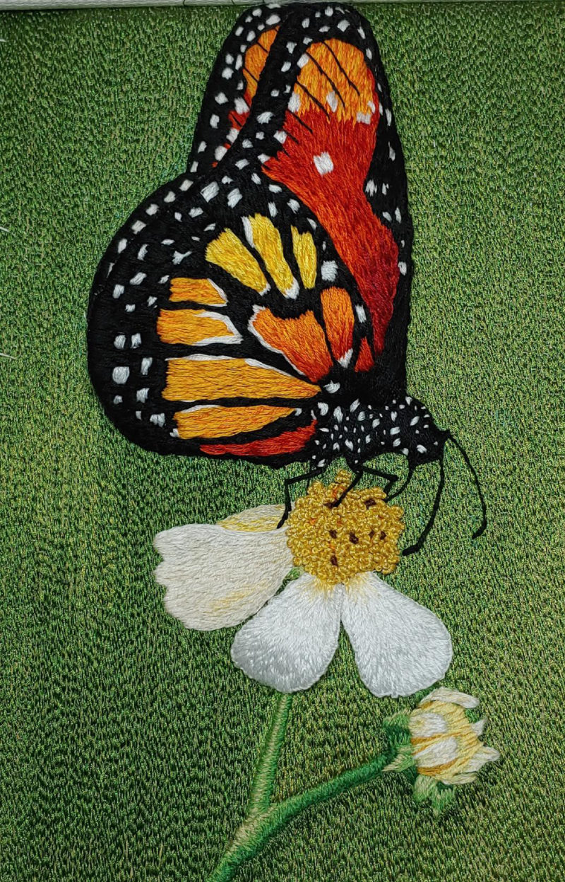 Monarch - Gingrich