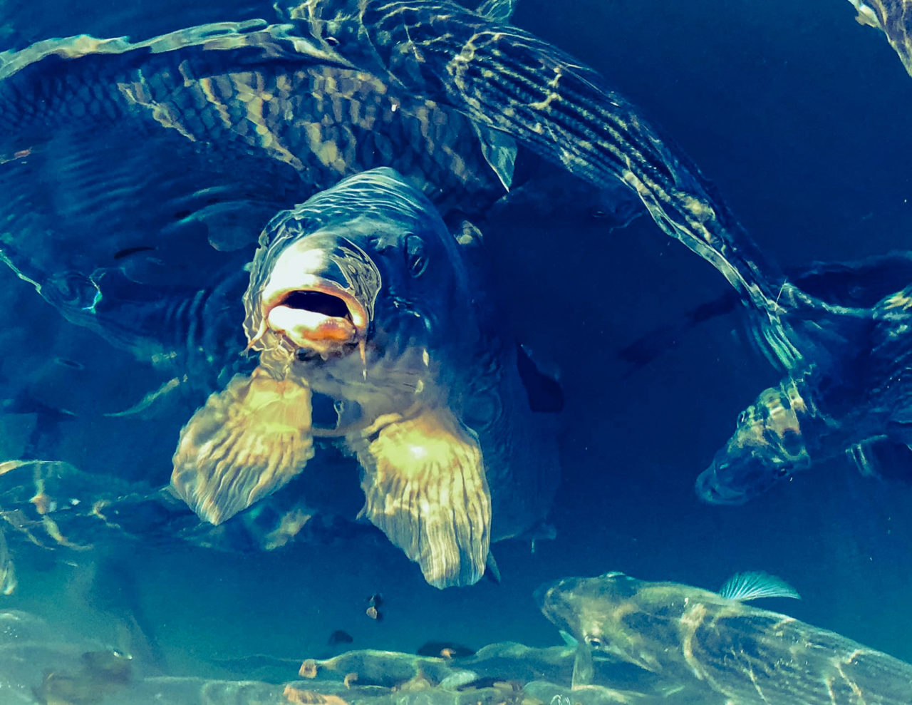 Please Keep My Home Safe  as Fish are Shouting: Clean Water - Rena Hottinger