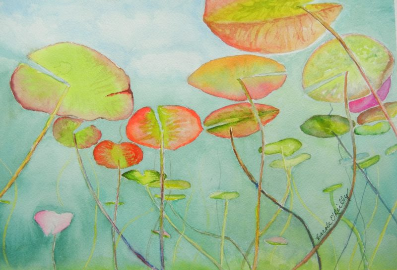 Water Lilies - O'Reilly